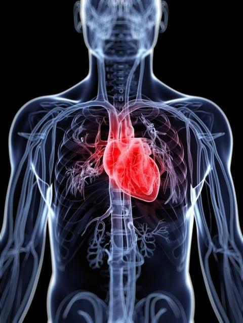 Ecocolor-Doppler, raffigurazione di un cuore